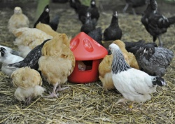 3kg Poultry Grit/Feed Station